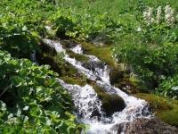 Potok protékající horskou loukou, nekolik metrů pod Mojžíšovými prameny
