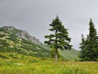 Okolí chaty pod Chlebom, vrchol v pozadí je Chleb