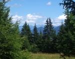 Jeden z několika výhledů v lese nad Žaškovským sedlem: Roháče